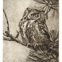 owl-on-a-branch